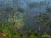 WLD-bayou-screen-BS